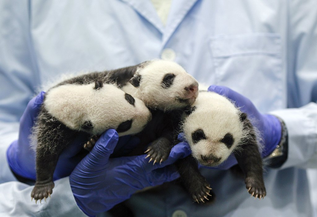 Biodiversity a top priority for pandas