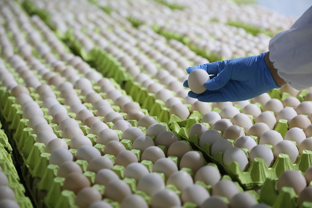 Hundreds of thousands of eggs pulled from Australian shelves over salmonella concerns