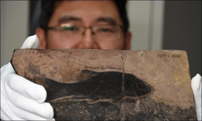 Chinese scientists identify new fish genus living 244 million years ago