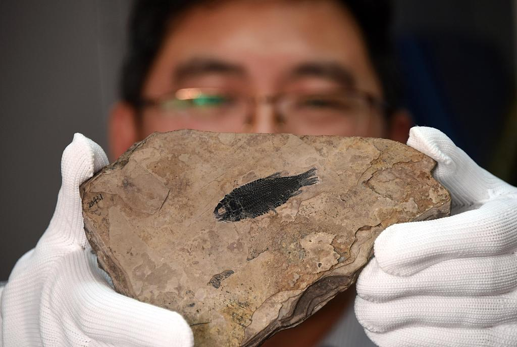 Chinese study helps trace evolution of fish scales