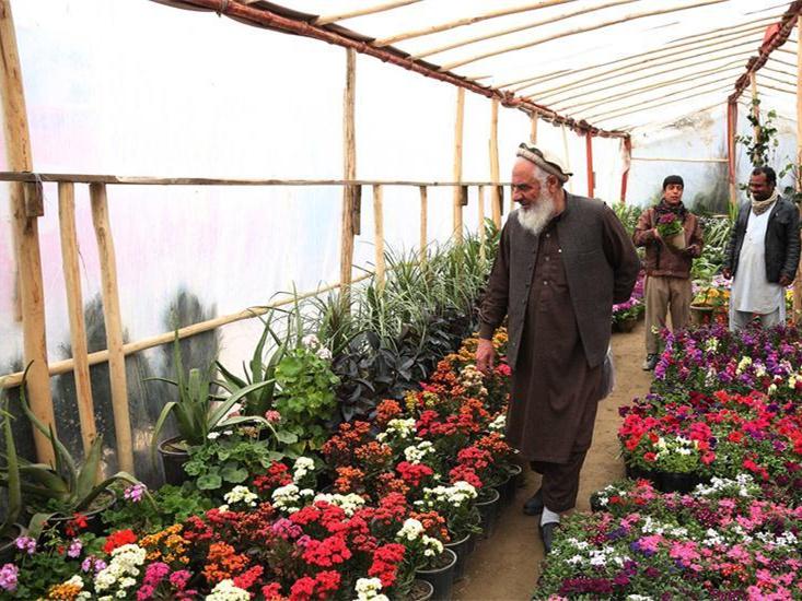flower shop in Kabul