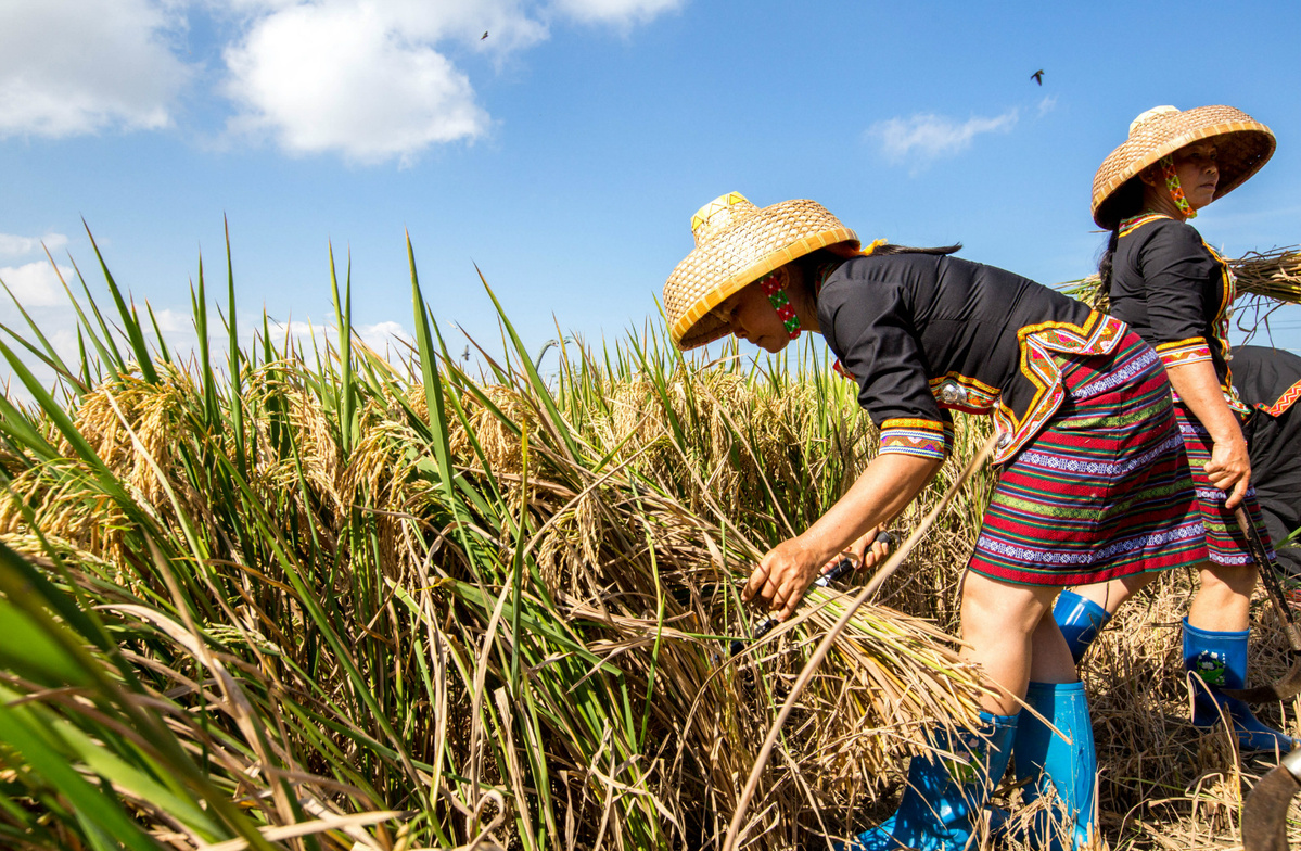 Hainan's hybrid seeds sprout along Belt, Road