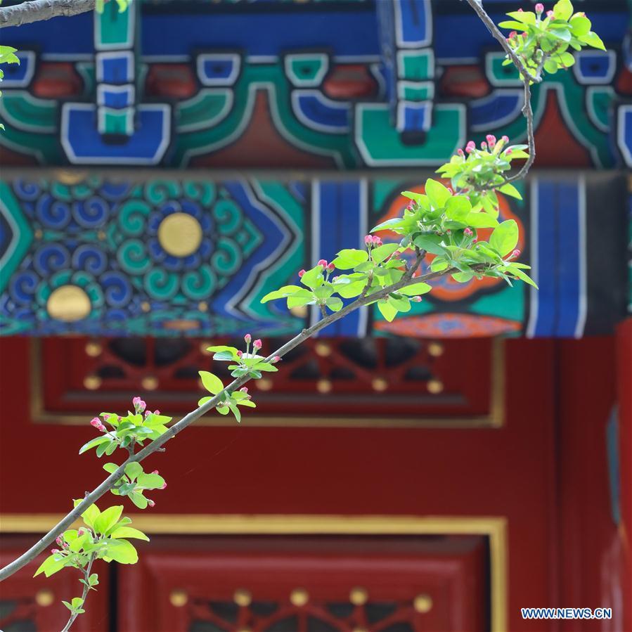 In pics: flowers in Forbidden City in Beijing