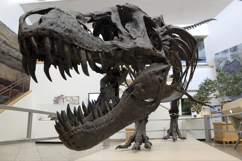 Snapshot of extinction: Fossils show day of killer
