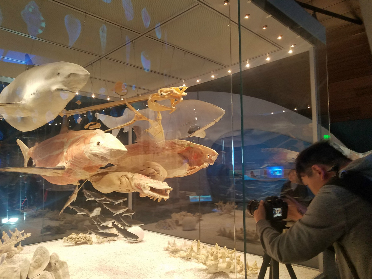Chinese maritime museum to open this year