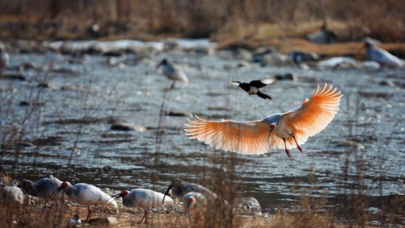 Wild birds thrive in NW China mountains