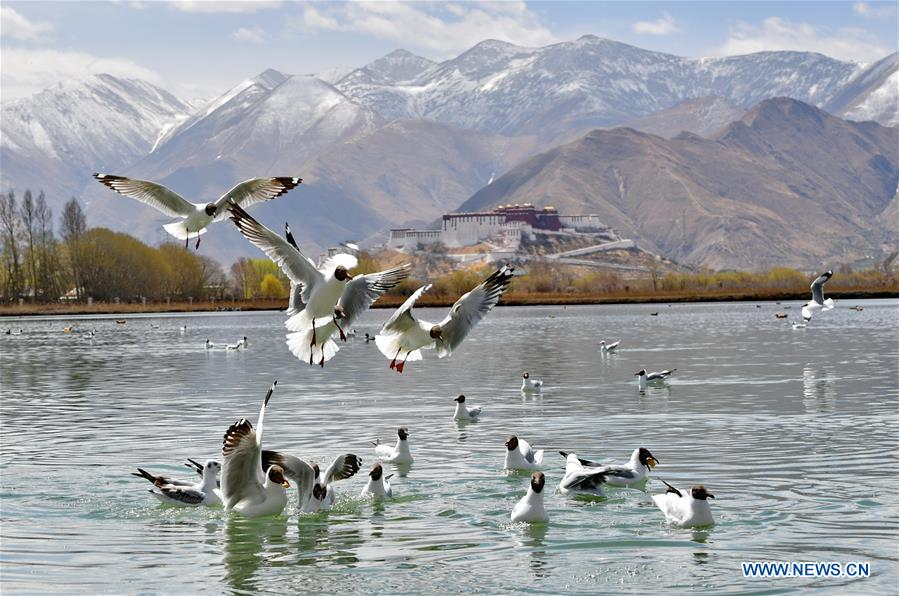 """Lhalu wetland, """"the Lung of Lhasa"""" in China's Tibet"""