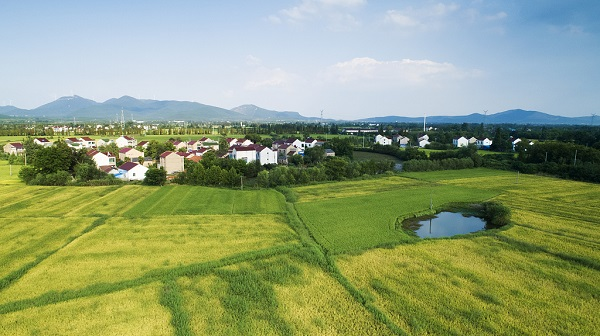 Most of China's rice fields suitable for water saving irrigation: research
