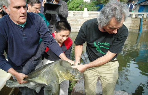 One of world's four giant softshell turtles dies in East China after artificial insemination