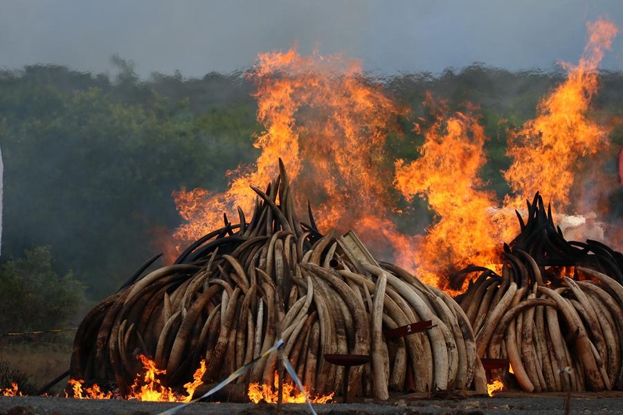 Zero tolerance for ivory trade