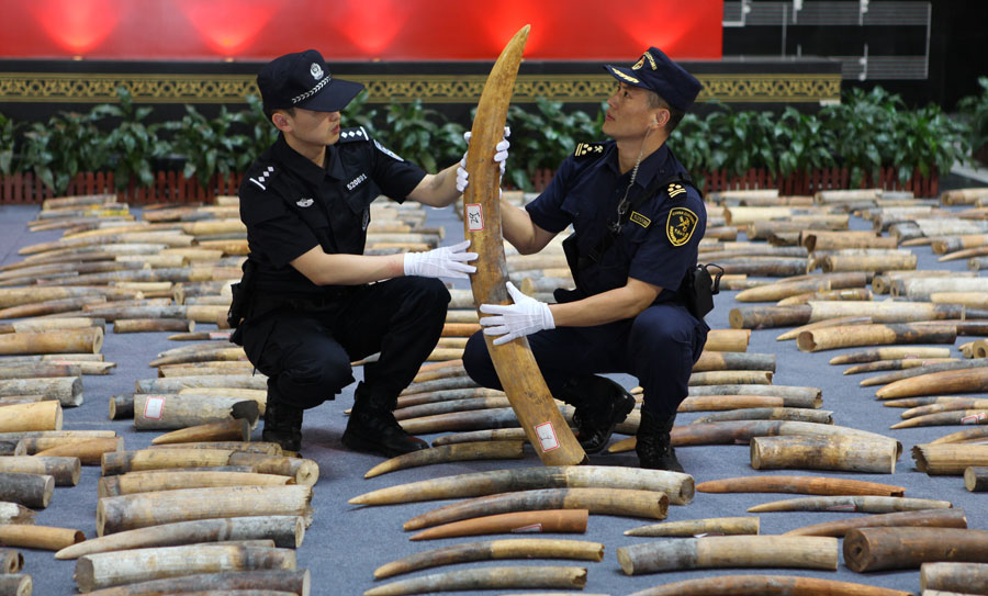 Customs makes its biggest tusk bust