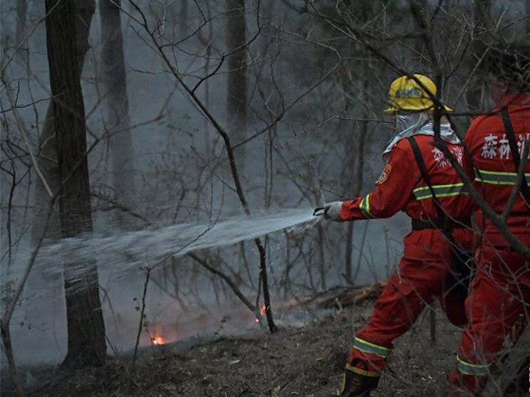 Forest fire put out in NE China