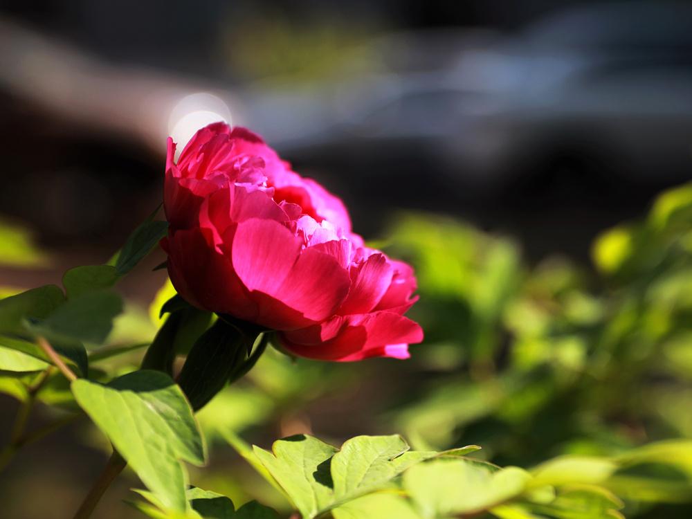 flower_副本.jpg