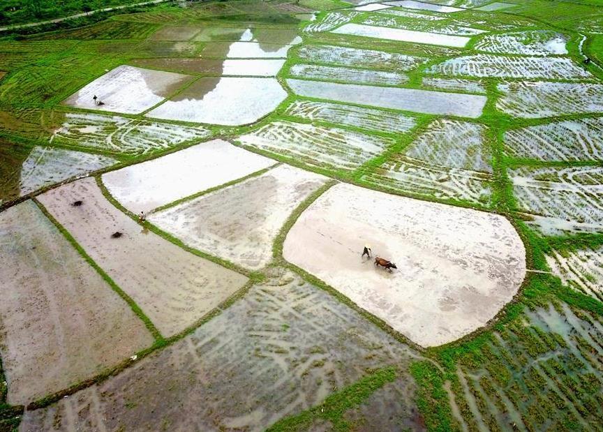 Farmers across China work on day of Guyu