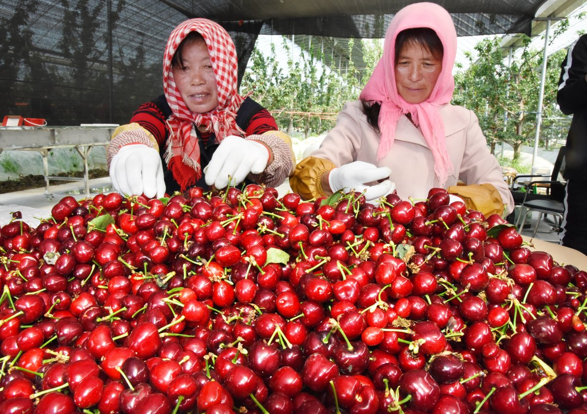China's farm produce reports 300-bln-yuan online sales in 2018: minister
