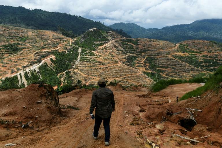 One million species risk extinction due to humans: draft UN report