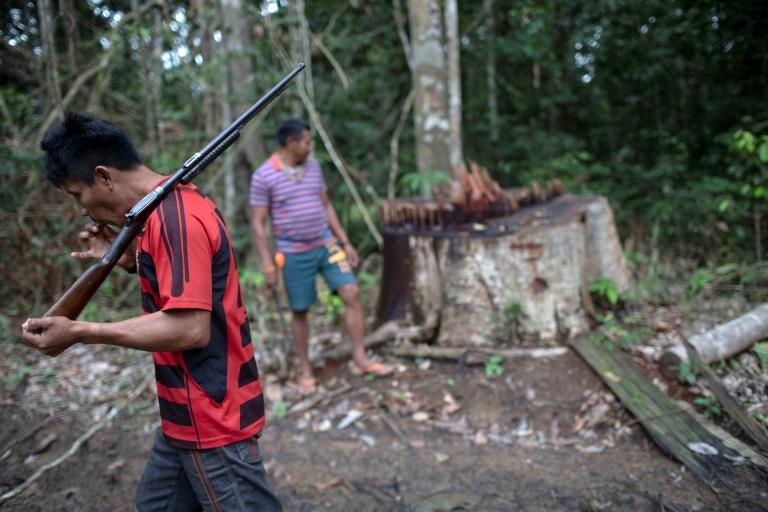 Illegal logging in Brazil turns Amazon into a powder keg