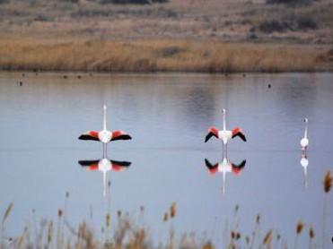 Flamingos make rare appearance in N China