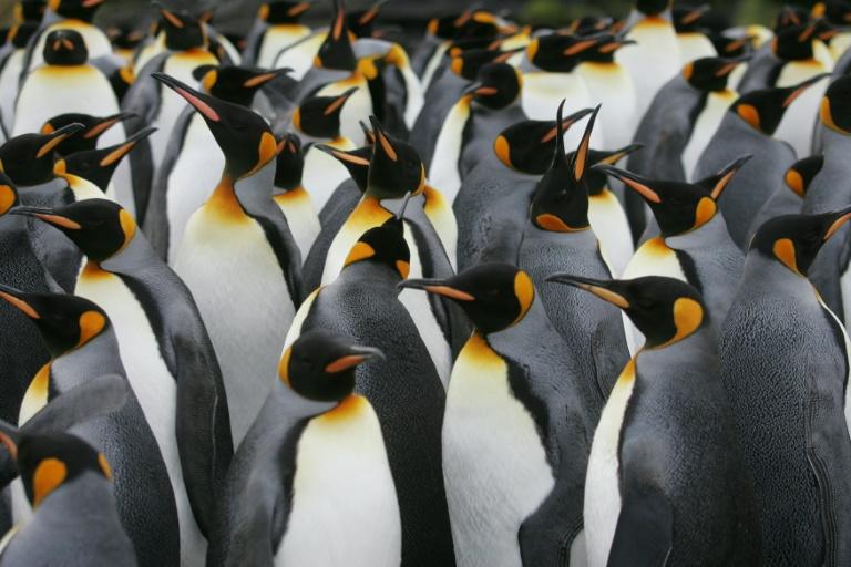 Antarctic penguins suffer 'catastrophic' breeding failure