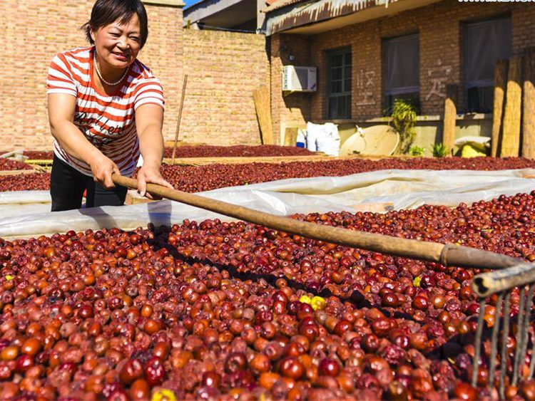 Chinese exchange to launch jujube futures