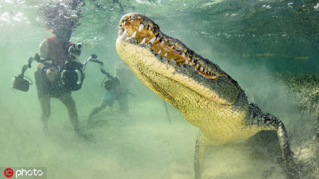 Daredevil photographer gets too close to crocodiles for a perfect snap