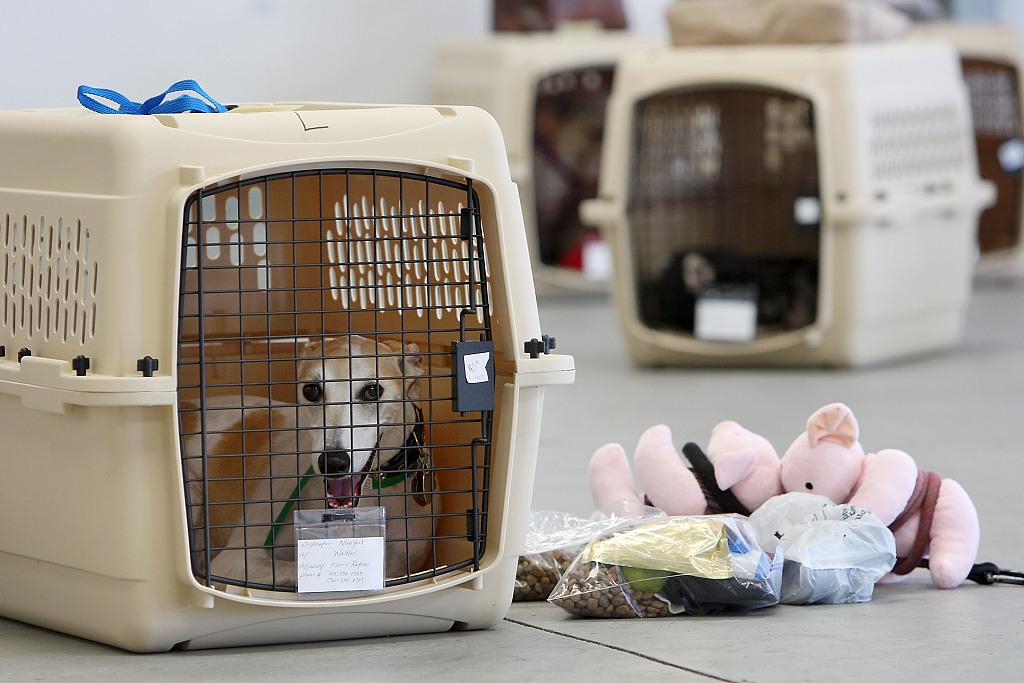 Pets entering China enjoy eased isolation quarantine check