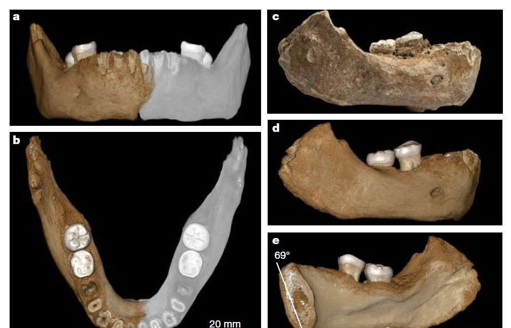 New fossil evidence gives insight into ancient hominins on Qinghai-Tibet Plateau