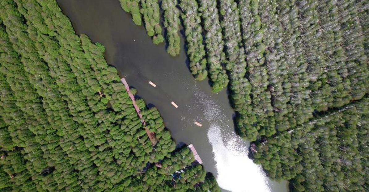 Scenery of aquatic forest park in east China's Jiangsu