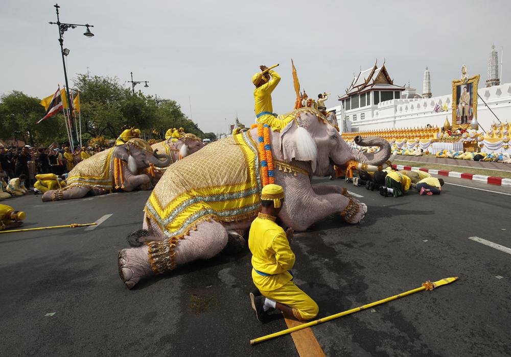 Elephants kneel to honor Thai new king