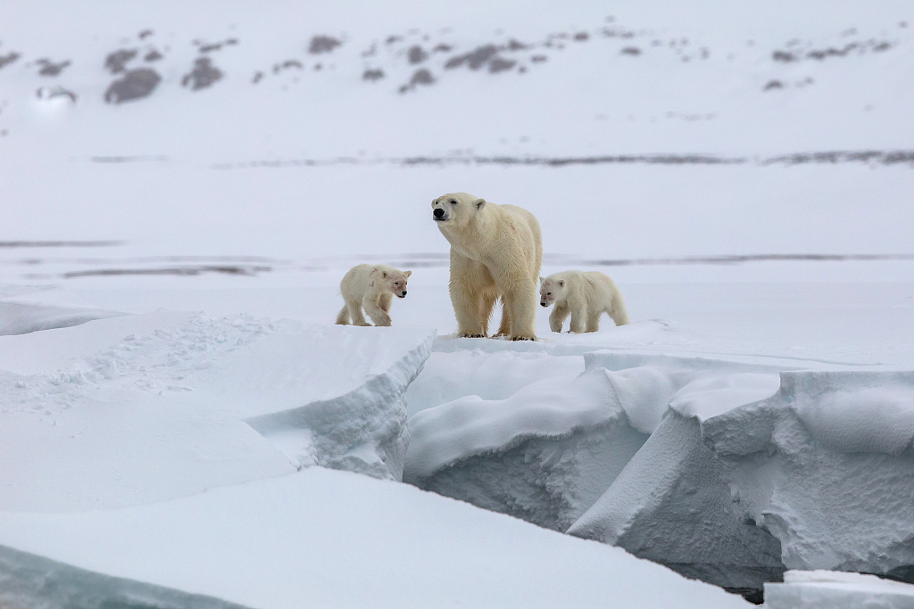 Protection of Arctic species key to cooperation