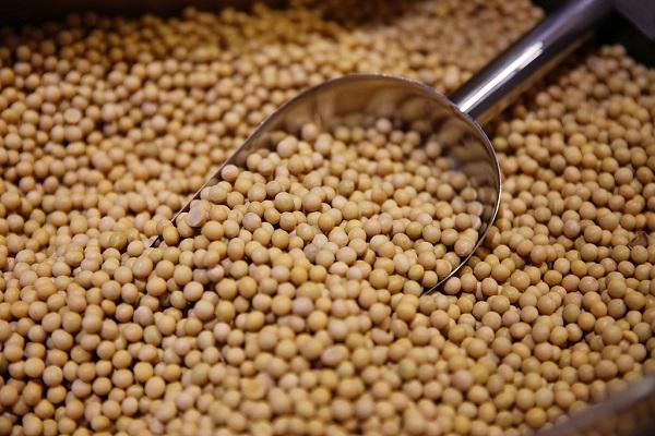 Soybean futures open higher