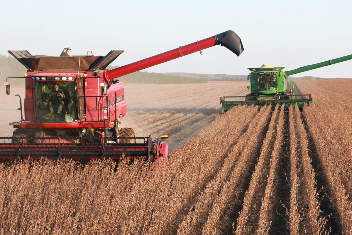 Subsidies encourage farmers to grow more soybeans