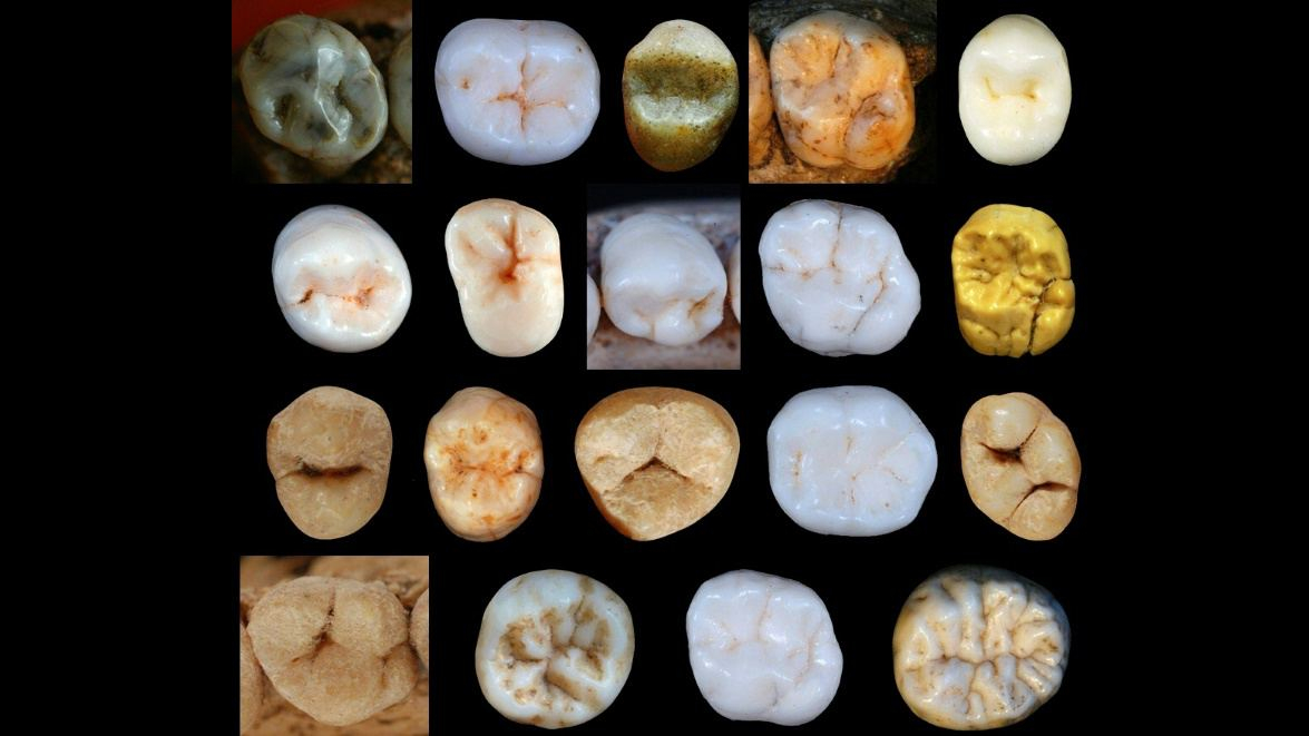 Modern humans split from Neanderthals 800,000 years ago: study