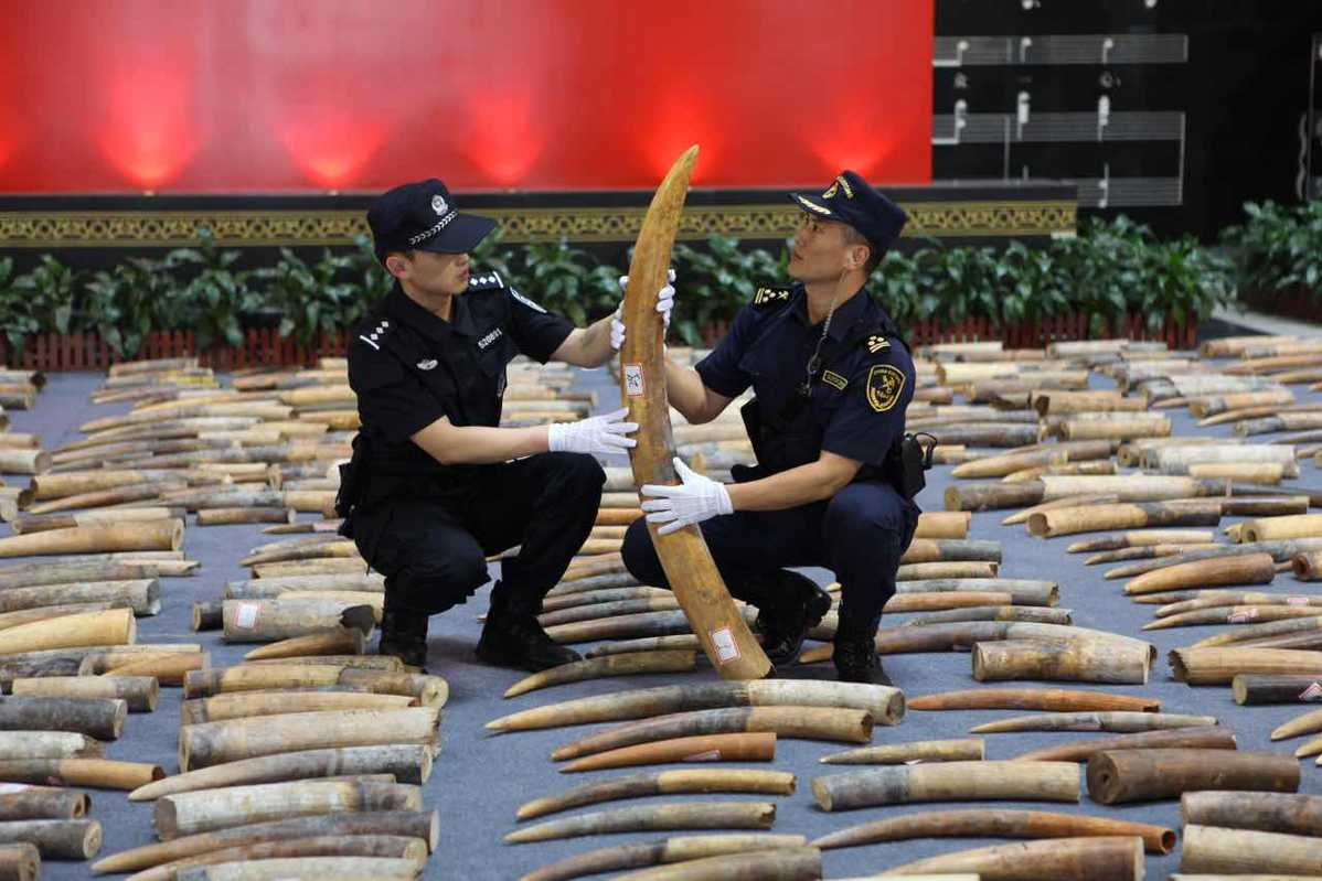 Over 7,000 kg of ivory products seized in South China's Guangdong Province