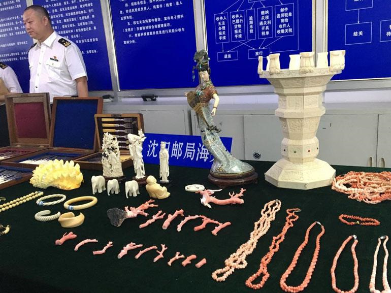 Over 300 smuggled endangered species items seized in NE China