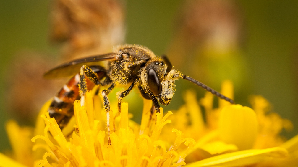 World Bee Day: You need bees not just because you like honey