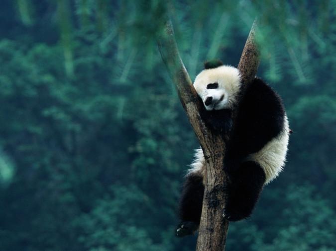 Hometown of Giant Panda woos global tourists in Prague