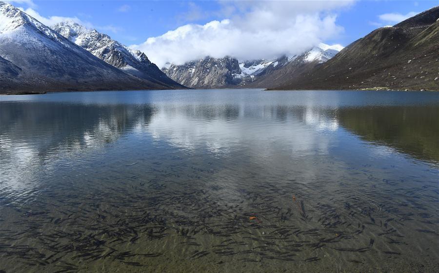 Scenery of Nianbaoyuze Mountain Scenic Resort in China's Qinghai