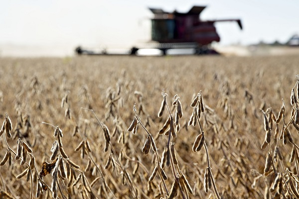 Responsibility for problems encountered by US farmers not on Chinese side: FM