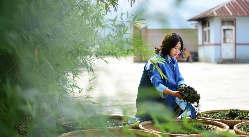 China's Urban Tea to explore North American market