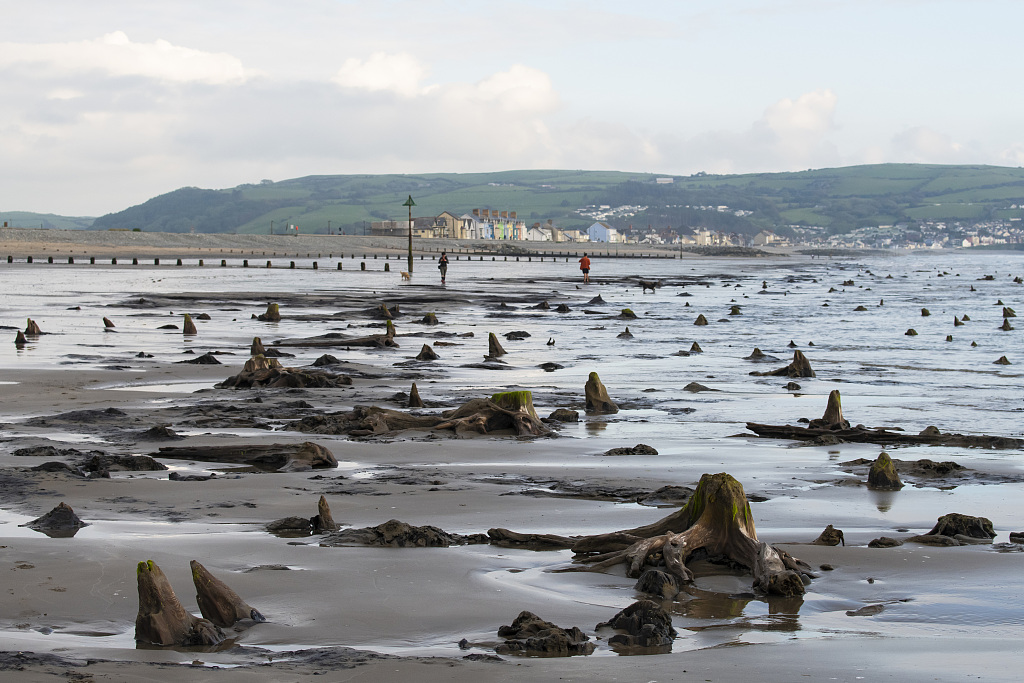 Storm uncovers 'sunken' underwater forest in Wales