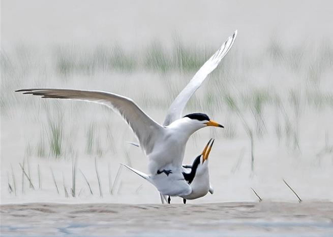 Water fowls find rest place, habitat at Minjiangkou Wetland in Fuzhou, SE China