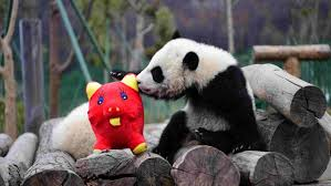 Meeting held in Dublin to promote tourism in Giant Panda hometown in China