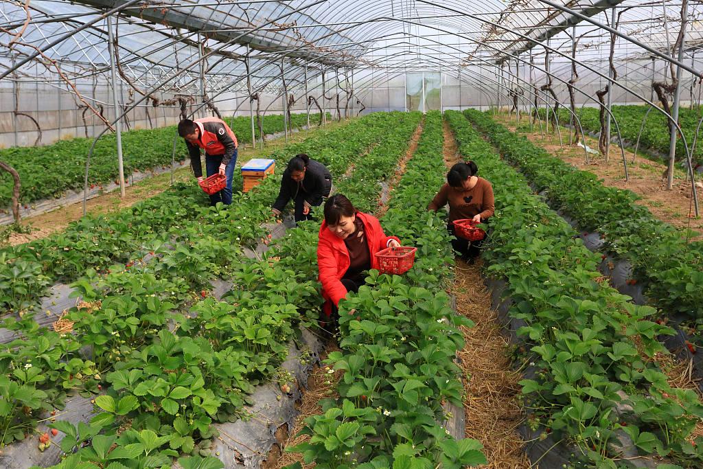 UN hails China's rural development model