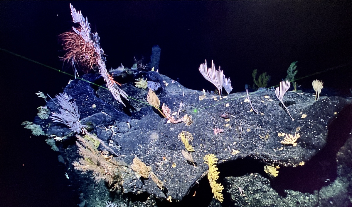 Chinese scientists discover 'seabed gardens' in Mariana Trench