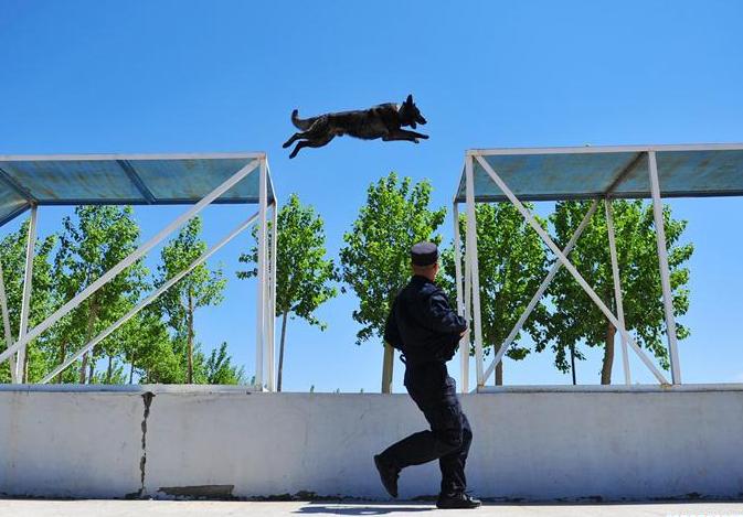 Police dogs trained in drill in Harbin, NE China