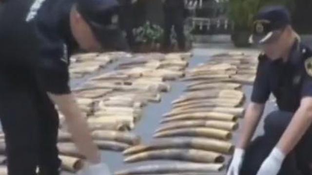 Nearly 7.5 tonnes of smuggled ivory tusks seized in Guangdong