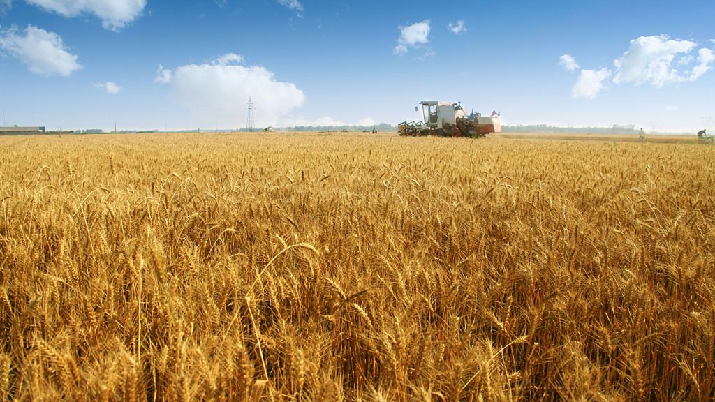Seasons of China   Grain in Ear