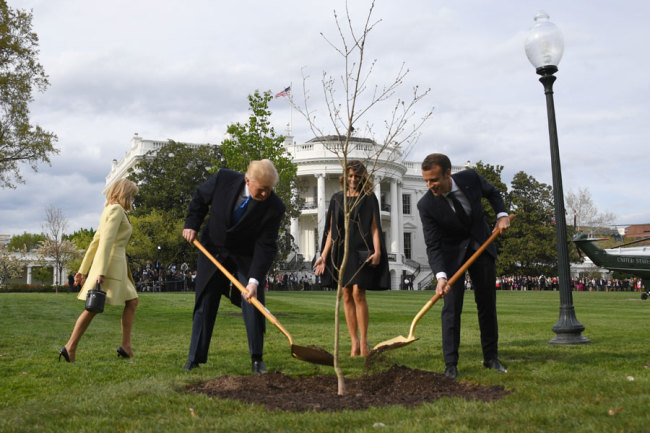 France's Macron will send new oak to Trump after tree died