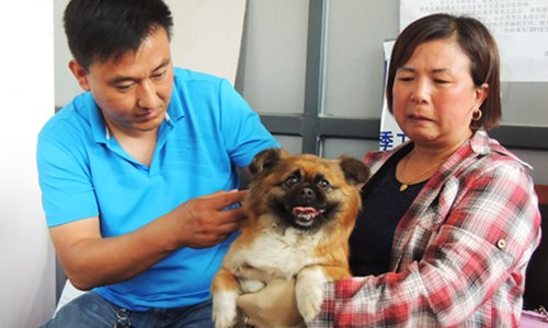 Hubei Province's 'strictest-ever' dog-raising ban sparks controversy